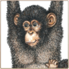 Chimpanzee Notecards